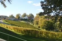 Some of Stone Hill Winery's vineyards